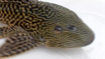 occhio di pesce video