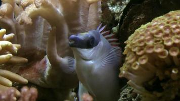 pesce tropicale video