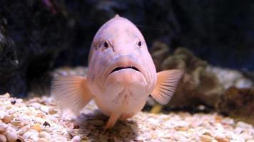 pesce di mare video