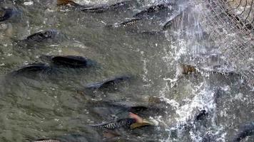 Industry for freshwater fish farming
