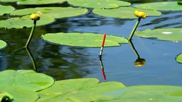galleggiante da pesca galleggia nel lago