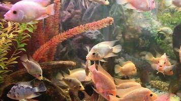peixe aquário