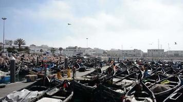 marocain, maroc, printemps, printemps, été, afrique, agadir, maroc, lumière, port, pêche, industrie, hommes, pêcheur, pêcheur, pêche, bateau, bateau de pêche, port, port, homme, gens, travail, travail, grand ouvriers, marins, pendaison, gens, autour, énorme, video