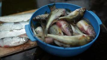 pesce fresco appena pescato video