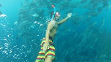 persona che nuota tra branchi di pesci jack