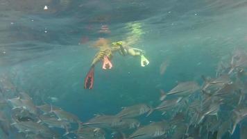 Personne nageant parmi banc de poissons jack