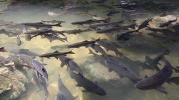 peixes grandes nadam na água