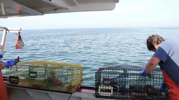 dois lobstermen inspecionam e juntam suas capturas, maine video