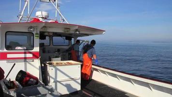 homem-lagosta puxar armadilhas para lagostas do oceano, reabastecer com isca, maine video