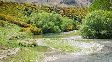 voar pescador no rio imaculado de Nova Zelândia. tiro amplo. video