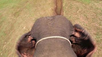 elefante andando no chão e agitando as orelhas video