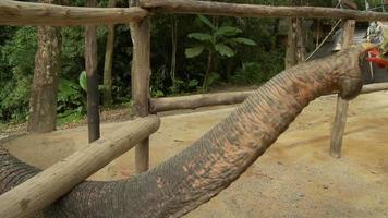 elefante asiatico feedig video