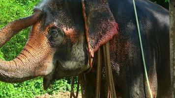 lavando al elefante.