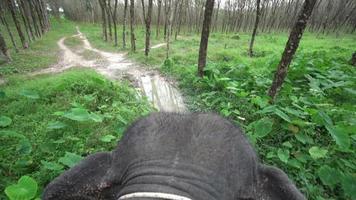vista superior del paseo en elefante por la jungla video