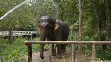 éclabousser de l'eau sur l'éléphant.
