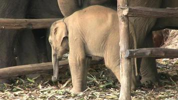Elefantenbaby, das im Regen isst