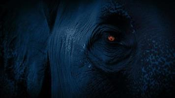 Elefantengesicht mit im Dunkeln leuchtendem Auge