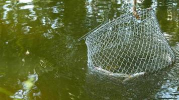 Fische sind in einem Korf