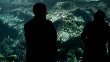 visitantes no aquário