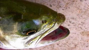 Un poisson hors de l'eau