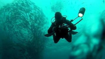 Person swimming among shoal of jack fish