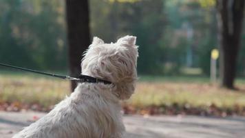 los perros se olfatean y mueven la cola. el encuentro de dos perros
