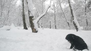 schwarzer Hund, der im Schnee im Wald sitzt