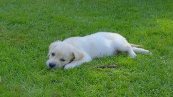 cucciolo felice in giardino