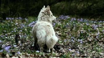caza de perros en el bosque