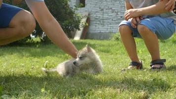 Un lindo niño acaricia a un cachorro de husky en un césped