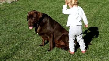 petite fille et labrador retriever brun