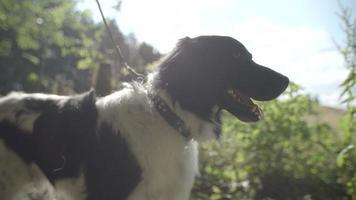 cane felice nella foresta - riflesso lente