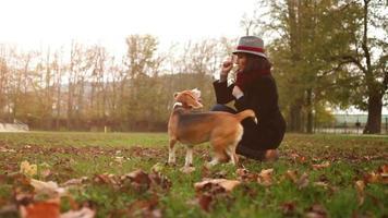 bella signora elegante stuzzica il suo beagle con un trattamento fino a quando alla fine si arrende