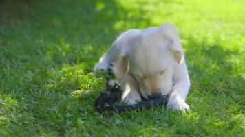 cucciolo carino in giardino