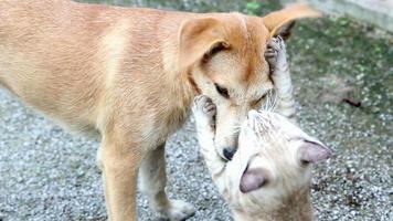 gato e cachorro brincando