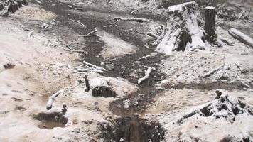 los lobos se mueven por una zona boscosa video