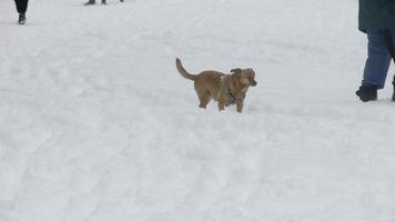 cane che corre nella neve