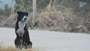 il cane nero sta aspettando sulla strada.