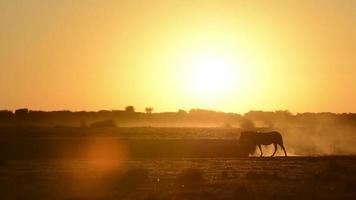 África puesta de sol cebra