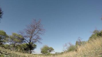 Spectacular footage of zebra walking over the camera, South Africa
