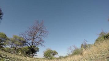 Imágenes espectaculares de cebra caminando sobre la cámara, Sudáfrica