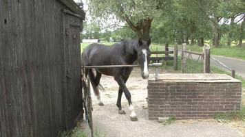 zoccoli di raschiatura del cavallo marrone