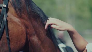 crinière de cheval. la main de la femme caressant le cheval. oeil de cheval