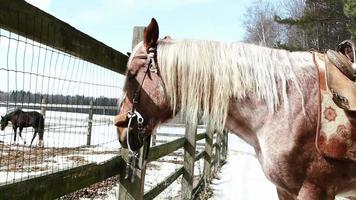 Pferd steht auf der Ranch