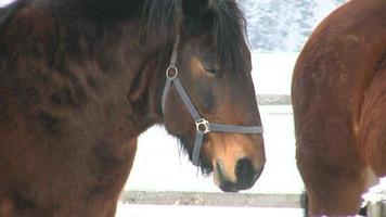 cavalo no inverno