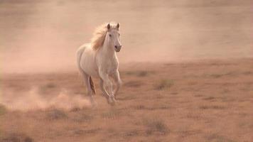 Mustang Horse Running Tight Shot