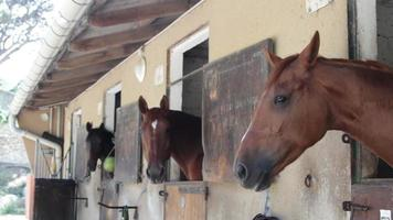 chevaux bruns en box