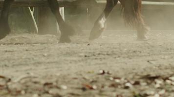cavalli che corrono fuggi fuggi