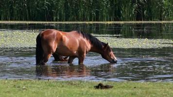 Pferde video