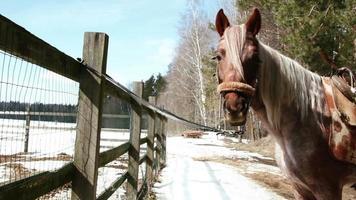 el caballo se para en el rancho